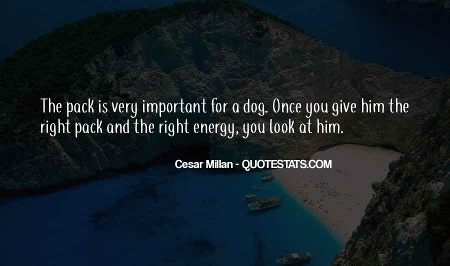 Cesar Millan Quotes #603417