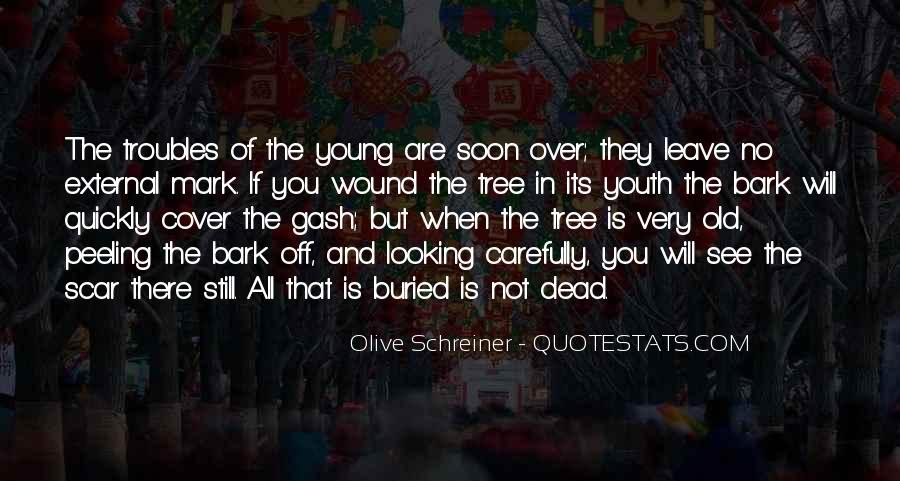 Schreiner Quotes #578239
