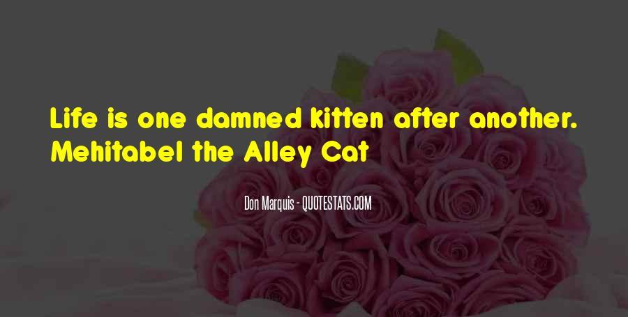 Cat And Kitten Sayings #1728679