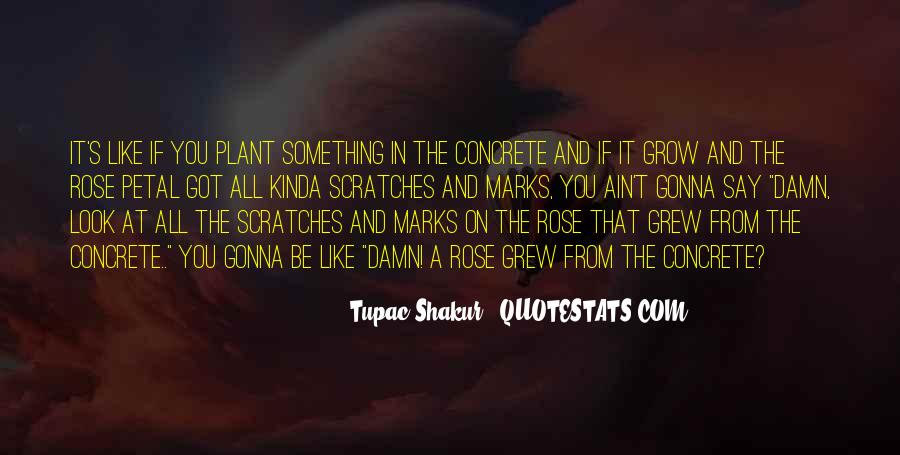 Quotes About The Rose That Grew From The Concrete #496342