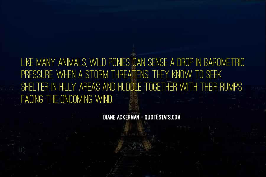 Quotes About Wild Ponies #1273082