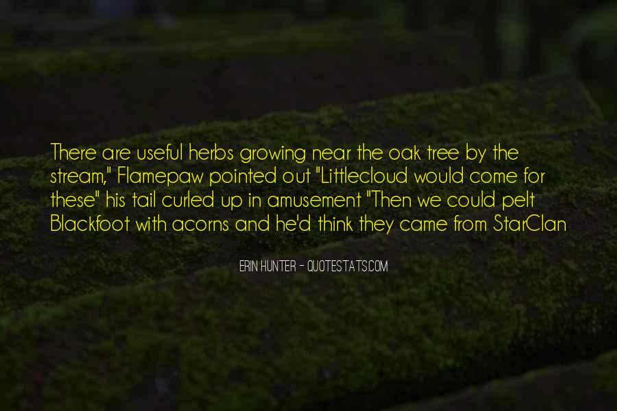 Quotes About Acorns #1102205