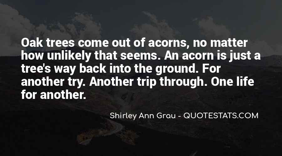 Quotes About Acorns #756160