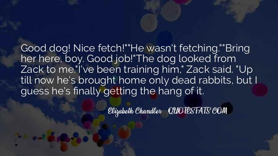 Quotes About Nice Rabbits #968304