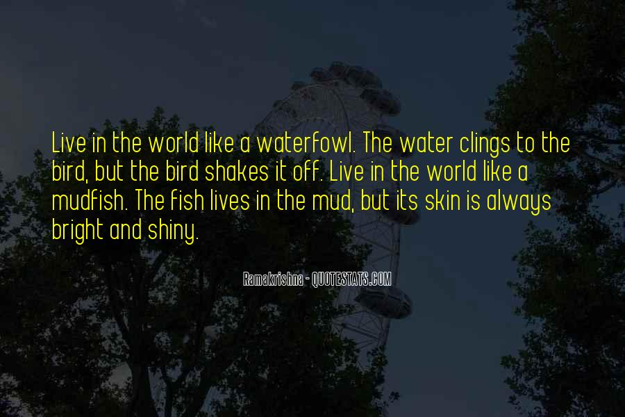 Live Like Water Quotes #870442
