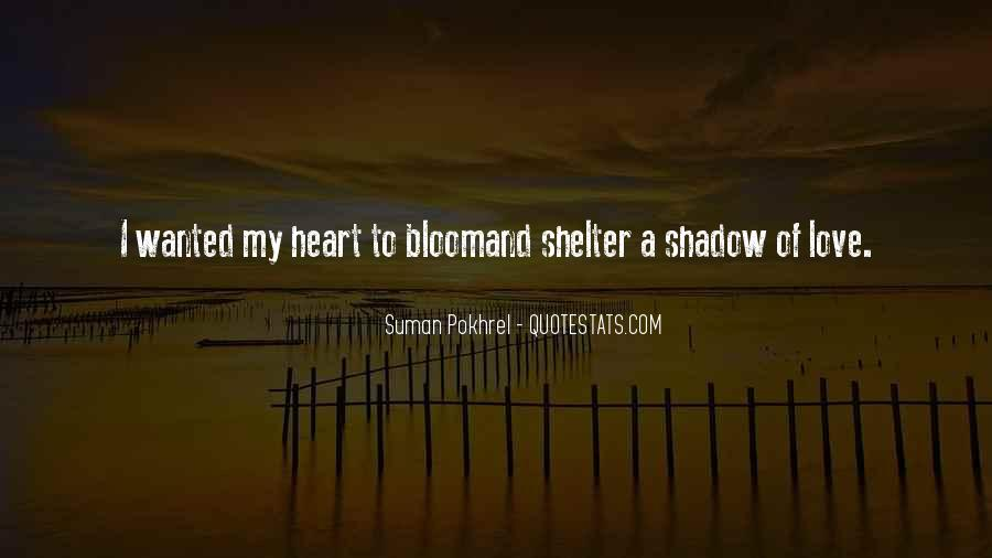 Love Shelter Quotes #1524589
