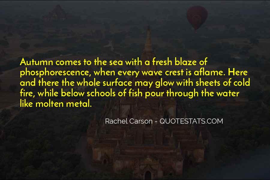 Phosphorescence Quotes #1797769