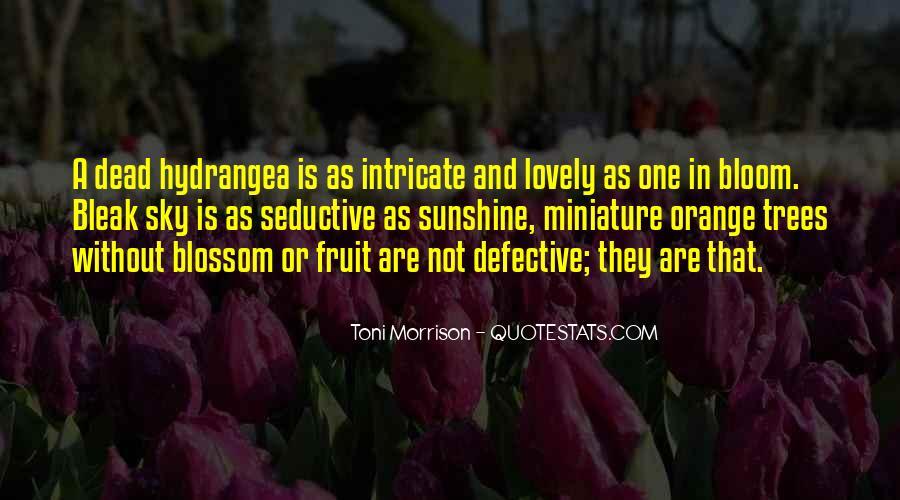 Sky Orange Quotes #170277