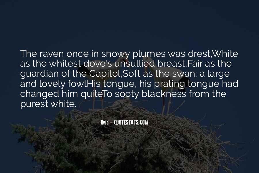 White Dove Quotes #1504029